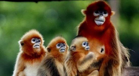 威海西霞口野生动物园--米廷会展(烟台)分公司